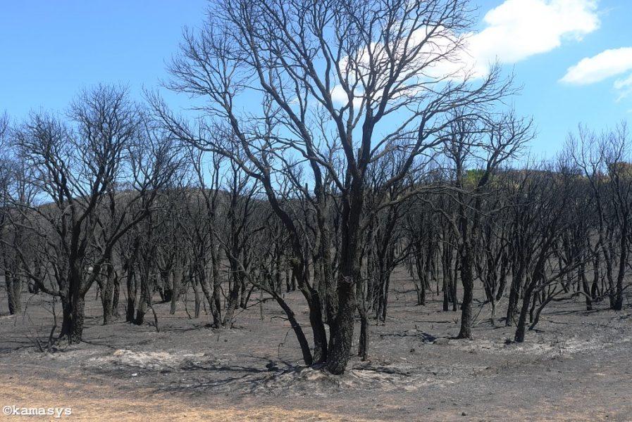 Foc Empordà - Sant Climent Sescebes